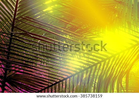 leaves and twig of palm Tree on yellow and pink background lighting tone - stock photo
