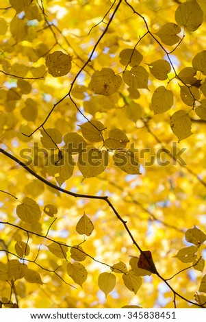 Leaves - autumnal colors - stock photo