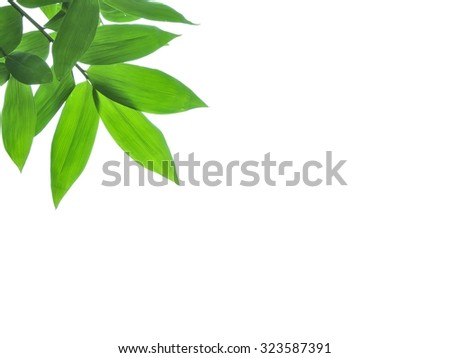 Leaves bamboo in the garden - stock photo