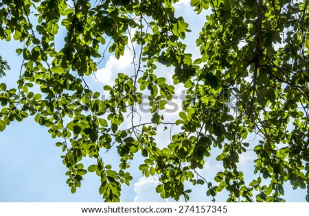leaves behind is the sky - stock photo