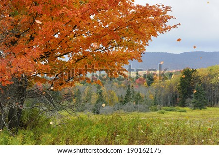 Leaves Blowing in Wind - stock photo