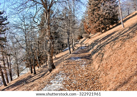 Leaves carpet on footpath in a forest of green pines and firs on Dolomites snowy mountains in winter - stock photo