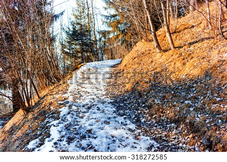 Leaves carpet on snow covered footpath in a forest of green pines and firs on Dolomites snowy mountains in winter - stock photo