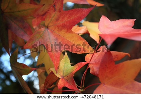 Leaves changing color in the Autumn