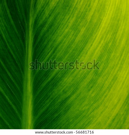Leaves, close-up - stock photo