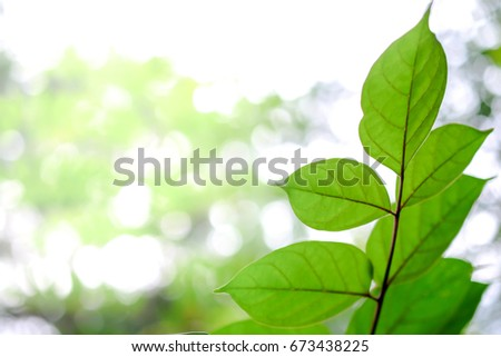 leaves close up isolated on white background