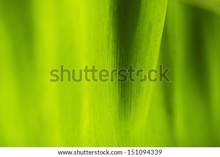 Leaves, close-up ,vertical