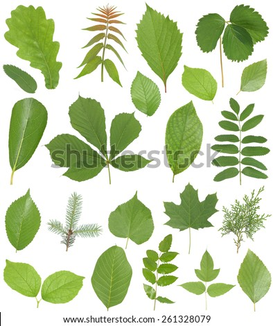 Leaves collection - stock photo