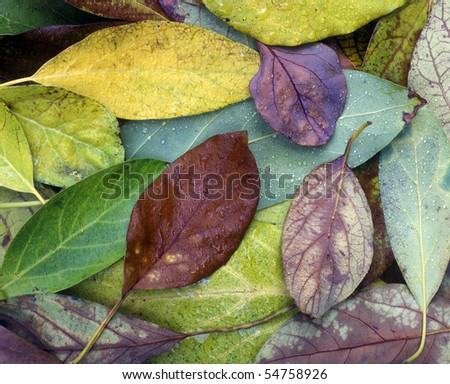 Leaves covering the Ground with Dew, close-up - stock photo