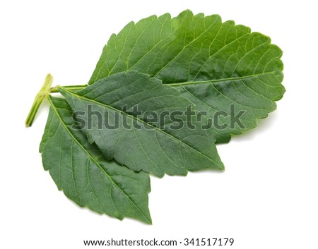 leaves dahlia isolated on white background