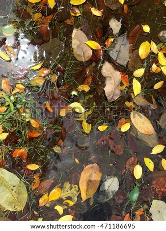 Leaves fall on water in autumn