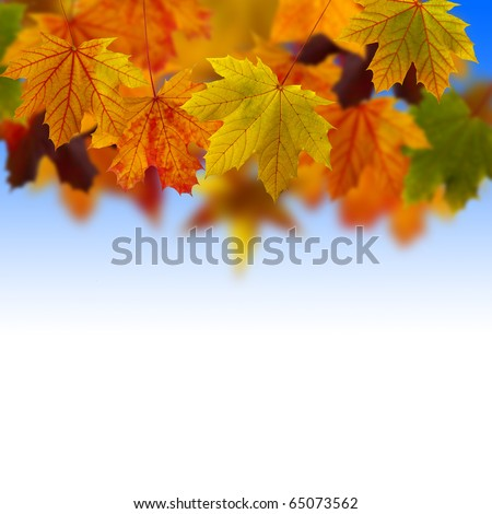 Leaves fallen from a tree in a sunny day - stock photo