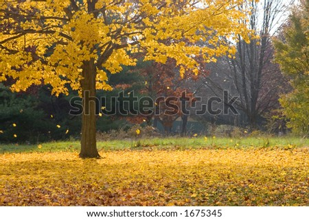 Leaves falling from an autumn tree
