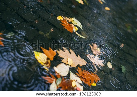 Leaves Floating in a Puddle in a City Park - stock photo