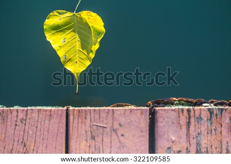 Leaves floating in water - stock photo