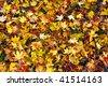 Leaves floor - stock photo