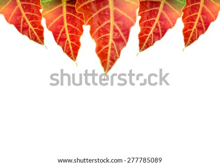 leaves framed on top part of white card - stock photo