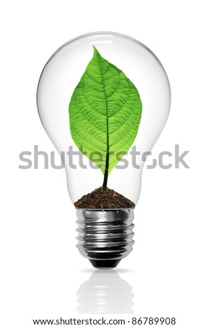Leaves grow in a light bulb isolated - stock photo