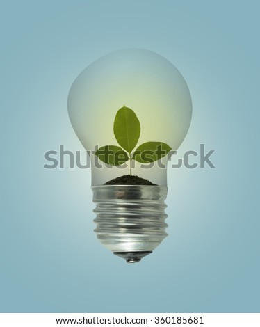 Leaves grow in a light bulb  on blue background - stock photo