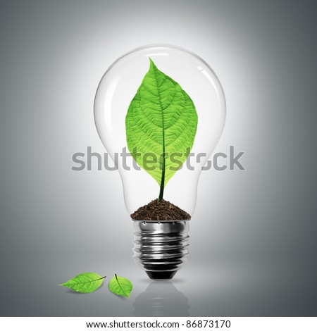 Leaves grow in a light bulb on gray background