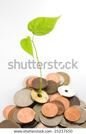 Leaves grow in between coins, focus on the leave. Concept of investment, generating wealth. - stock photo