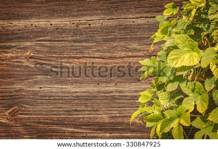 Leaves hop on a background of an old wooden surface - stock photo