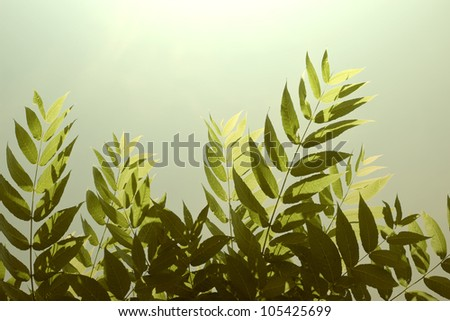 Leaves illuminated by the Sun - stock photo