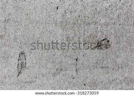 Leaves imprinted on cement sidewalk - stock photo