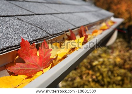 Leaves in a rain gutter - stock photo