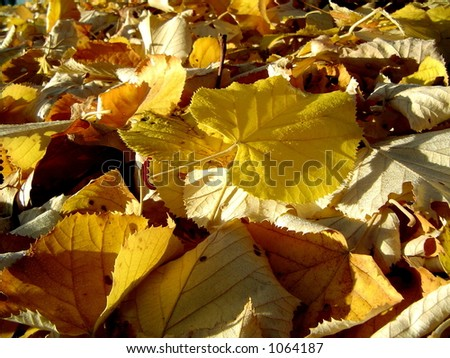 Leaves in autumn.