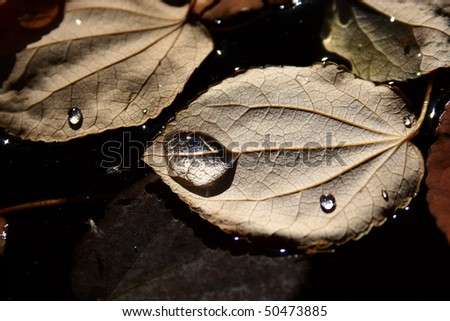 Leaves in autumn - stock photo