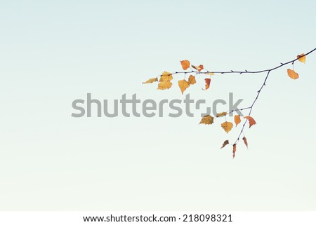 Leaves in autumn blue sky  - stock photo