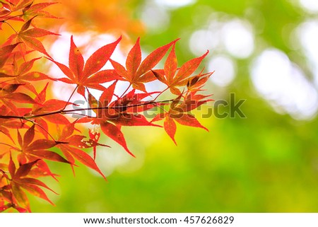 leaves in autumn forest background - stock photo