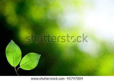 leaves in deep forest