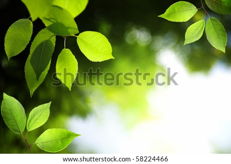 leaves in deep forest - stock photo