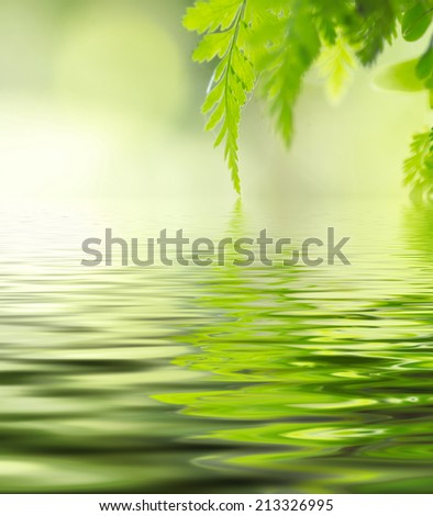 leaves in soft colour. digital compositing, colour tone, water reflection and ripple effects. - stock photo