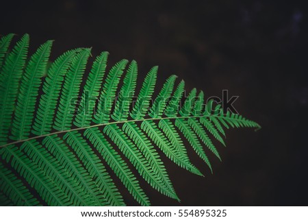 Rainforest Leaves Stock Images, Royalty-Free Images & Vectors ...