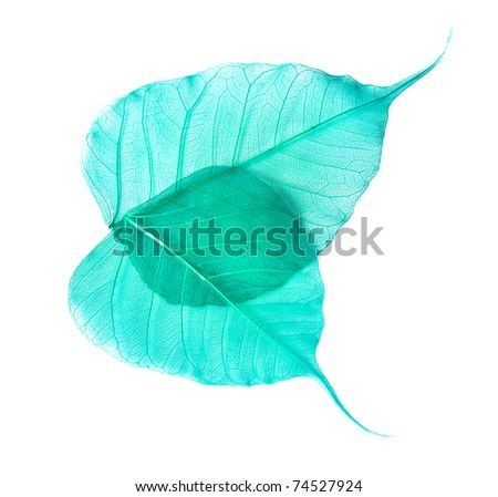 leaves isolated on white background - stock photo