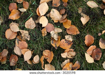 leaves laying on the grass