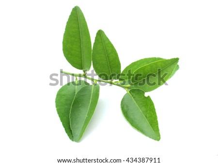 Leaves lemon isolated on white background