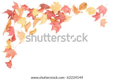 leaves. Macro. Isolated over white background - stock photo