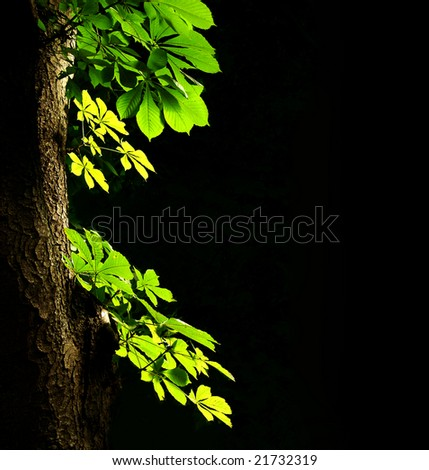 Leaves of a chestnut on a dark background