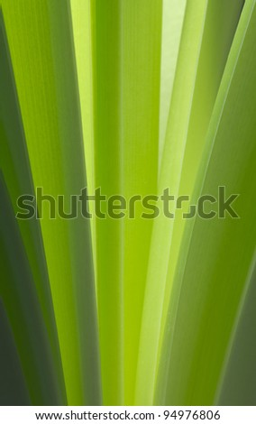 Leaves of Amaryllis - stock photo