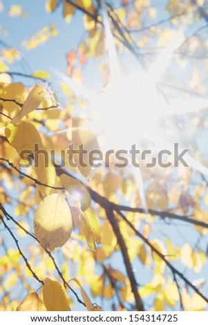 leaves of autumn flare - stock photo