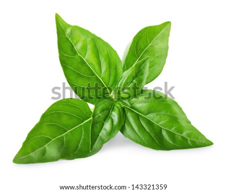 Leaves of basil isolated on white background - stock photo