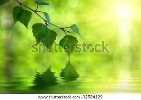 leaves of birch and sunny day - stock photo