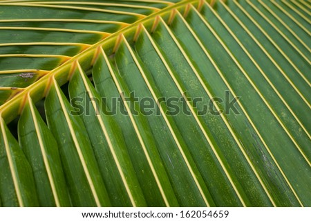 Leaves of coconut trees in the tropics - stock photo
