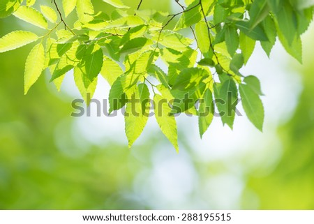 Leaves of fresh green