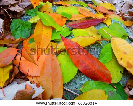 Leaves of many colors create a beautiful scene in southern Wisconsin. - stock photo