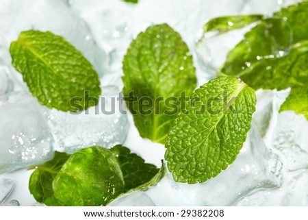Leaves of mint in ice - stock photo